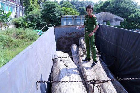 Binh Duong: Cong an bat giu nhieu khoi go khong ro nguon goc - Anh 1