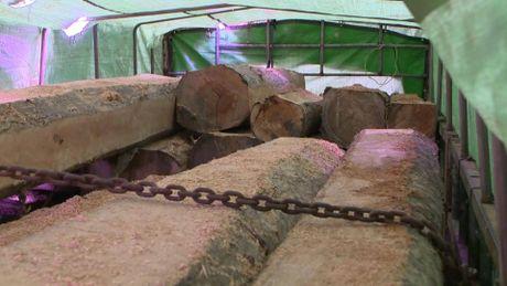 Biên phòng nổ súng, chặn đoàn xe chở gỗ lậu ở Gia Lai