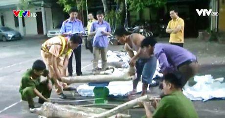 Bac Giang: Bat giu gan 600kg go sua do van chuyen trai phep - Anh 1