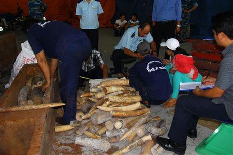 Bắt giữ hơn 2 tấn ngà voi nhập lậu qua cảng Cát Lái