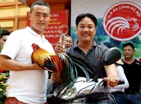 Trang trai co nhieu ga doat giai 'hoa hau' o Binh Duong - Anh 1