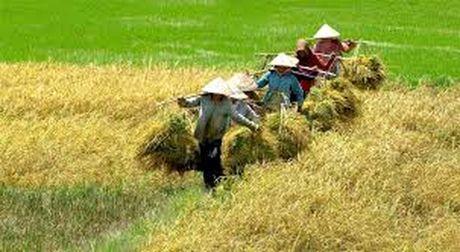 Chuyen gia kinh te Pham Chi Lan: Khong the de nong nghiep mai thiet thoi! - Anh 1