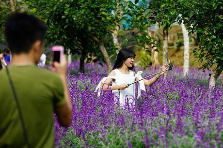 Tim biec hoa oai huong tren cao nguyen trang - Anh 3