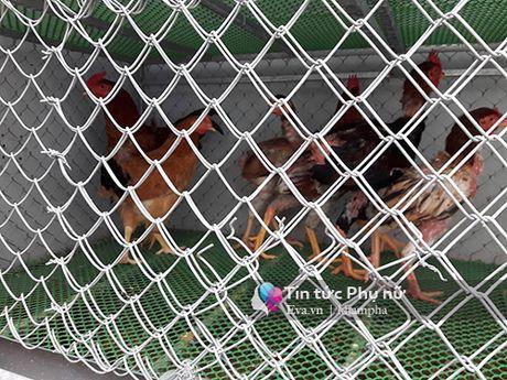 Ong bo dam vua trong rau con nuoi chim, ga tren san thuong phuc vu con nho - Anh 10