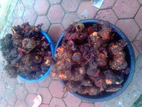 Hanh phuc bat ngo cua ong bo sau 7 nam gian tinh mach thung tinh - Anh 2