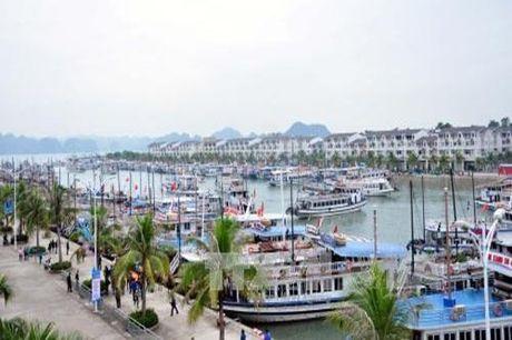 Quang Ninh: Tap doan Tuan Chau thu phi qua cang doi voi khach du lich la bat hop ly? - Anh 1