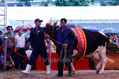 Tung bung cuoc thi Hoa hau bo sua Moc Chau 2016 - Anh 7