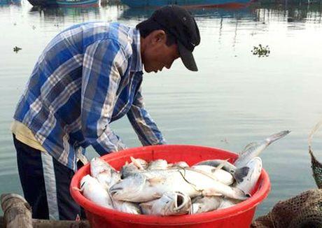 Ngu dan vung pha Tam Giang ngong ho tro - Anh 1