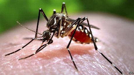 Viet Nam: Phat hien 56 ca the muoi duong tinh voi vi rut Zika - Anh 1