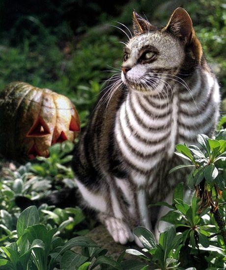 Cuoi sac my tom voi dam thu cung dien trang phuc Halloween - Anh 13