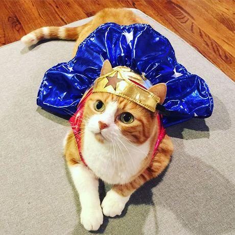 Cuoi sac my tom voi dam thu cung dien trang phuc Halloween - Anh 15