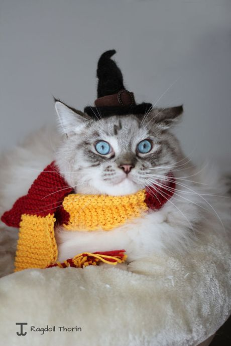Cuoi sac my tom voi dam thu cung dien trang phuc Halloween - Anh 18
