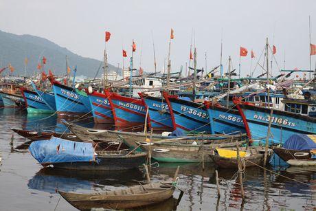 21 tau, 223 ngu dan Quang Ngai nam trong vung nguy hiem cua bao Sakira - Anh 1
