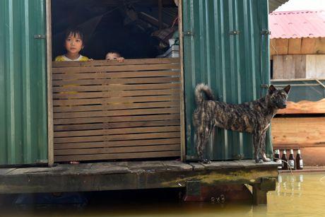 Cuoc song tren mai nha o ron lu Quang Binh - Anh 7