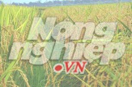 Tuyen Viet Nam da 3 tran giao huu o Han Quoc - Anh 1