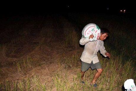 Quang Ninh hoi ha gat lua don sieu bao Sarika - Anh 10