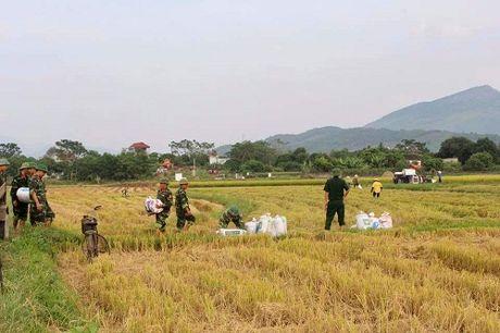 Quang Ninh hoi ha gat lua don sieu bao Sarika - Anh 12