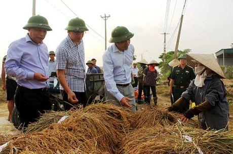 Quang Ninh hoi ha gat lua don sieu bao Sarika - Anh 1