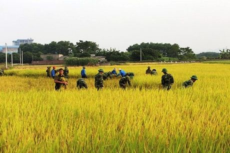 Quang Ninh hoi ha gat lua don sieu bao Sarika - Anh 2