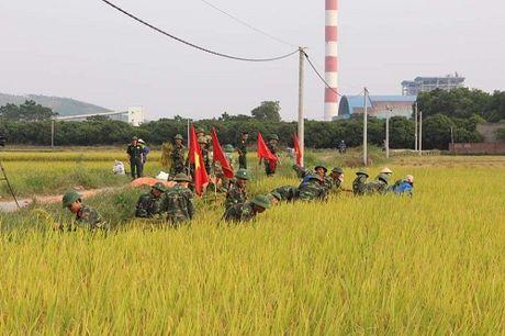 Quang Ninh hoi ha gat lua don sieu bao Sarika - Anh 3