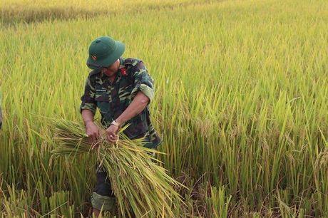 Quang Ninh hoi ha gat lua don sieu bao Sarika - Anh 4