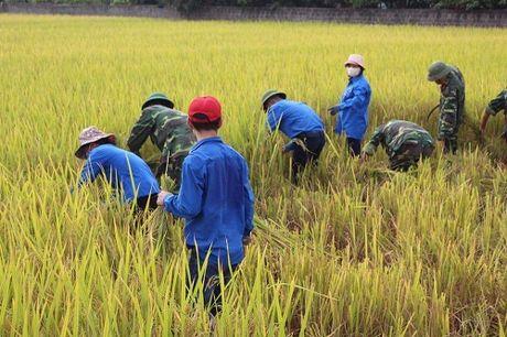 Quang Ninh hoi ha gat lua don sieu bao Sarika - Anh 5
