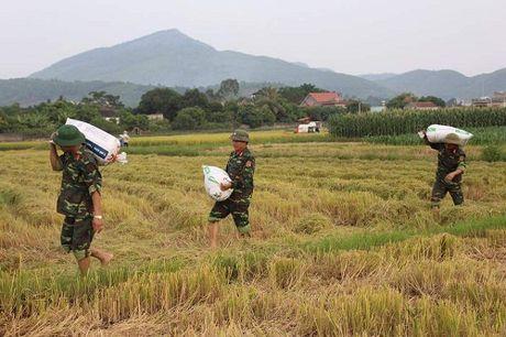 Quang Ninh hoi ha gat lua don sieu bao Sarika - Anh 7