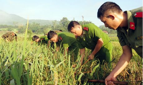 Quang Ninh, Hai Phong gap rut 'chay bao' - Anh 1
