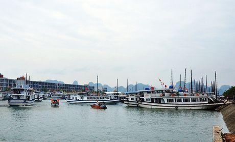 Quang Ninh: Cam bien tu 8h ngay 18-10, van dong tau thuyen ve noi tranh tru bao - Anh 3