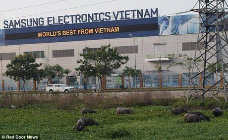 Scandal Samsung lan toi nha may rap pin cho Galaxy Note 7 o Viet Nam - Anh 2