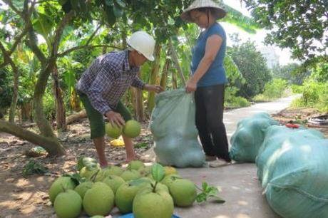 Nong san chu luc cua Hau Giang deu duoc chung nhan nhan hieu hang hoa - Anh 1