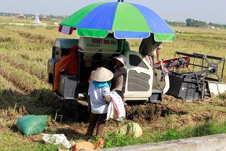 Quang Ninh – Hai Phong: Dan tran chong bao so 7 - Anh 3