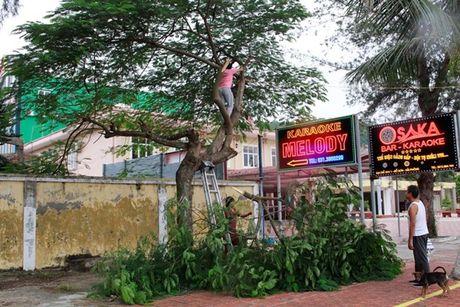 Quang Ninh – Hai Phong: Dan tran chong bao so 7 - Anh 7