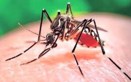 TPHCM cong bo dich Zika - Anh 1
