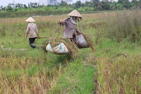 Hai Phong huy dong 'tong luc' hoi ha gat lua chay dua voi bao - Anh 1