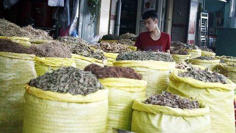 Duoc lieu Trung Quoc: Vua dung vua lo ruoc benh - Anh 1