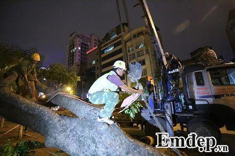 Can canh trang dem di chuyen hang cay co thu tren pho Kim Ma - Anh 12