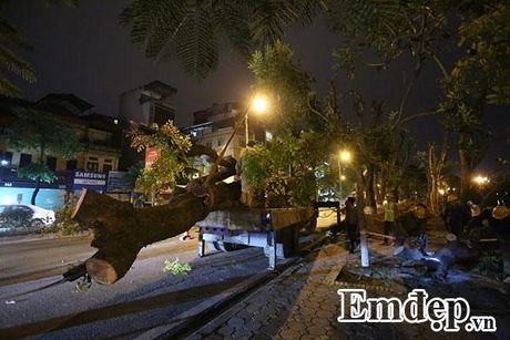 Can canh trang dem di chuyen hang cay co thu tren pho Kim Ma - Anh 7