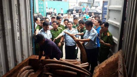 Tap hoa chung 4m2 nhap lau hon 2 tan nga voi gia tram ty tu Chau Phi ve Sai Gon - Anh 1