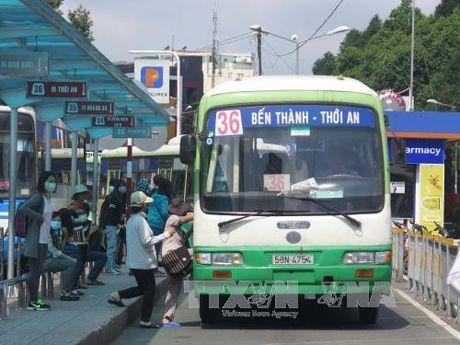 Nhieu sai pham trong hoat dong tro gia xe buyt tai Tp. Ho Chi Minh - Anh 1