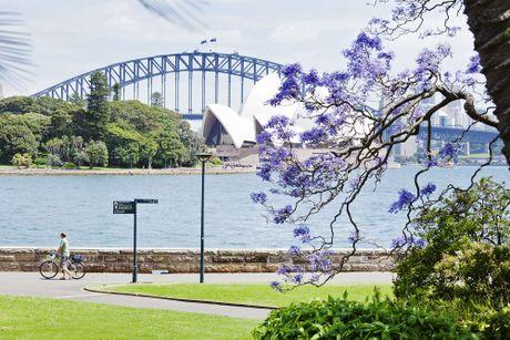 Australia dem nguoc cho don sac tim ruc ro cua mua hoa jacaranda - Anh 2