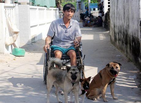 Ngạc nhiên đàn chó giúp chàng trai tật nguyền mưu sinh trên đảo Lý Sơn