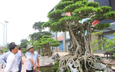 Nhung 'sieu cay canh' gia bac ty o Viet Nam - Anh 2