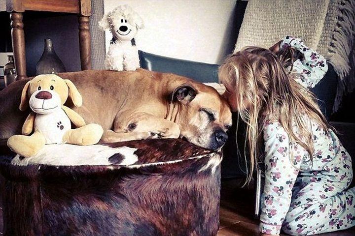 Cuộc chia tay cuối cùng của bé gái với chú chó vừa mù vừa điếc